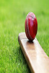 Cricket Image for Illustrative Purposes